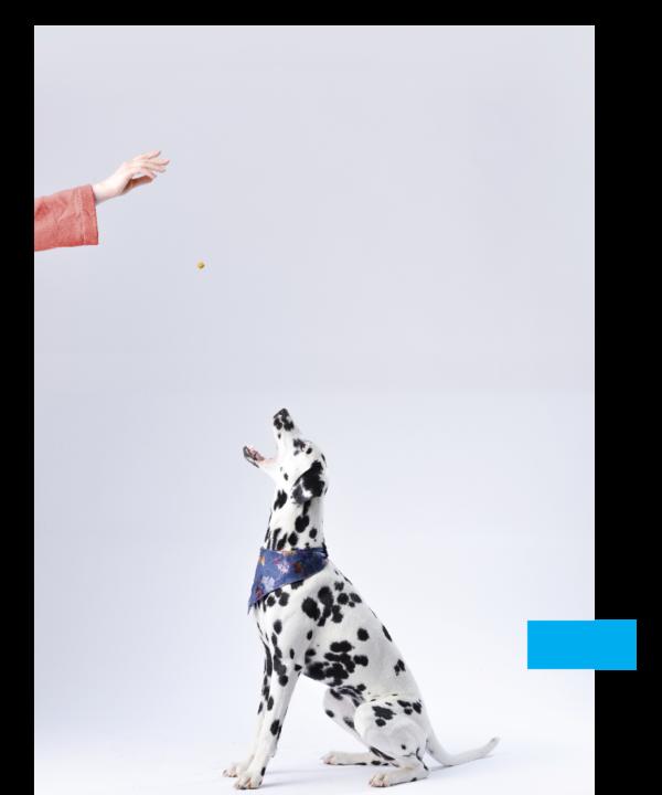 dogfood1-600×720