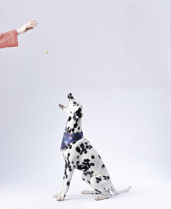 animal-background-canine-933498-scaled-e1590678299435-591×720